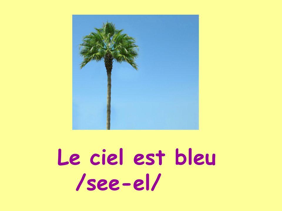 Le ciel est bleu /see-el/