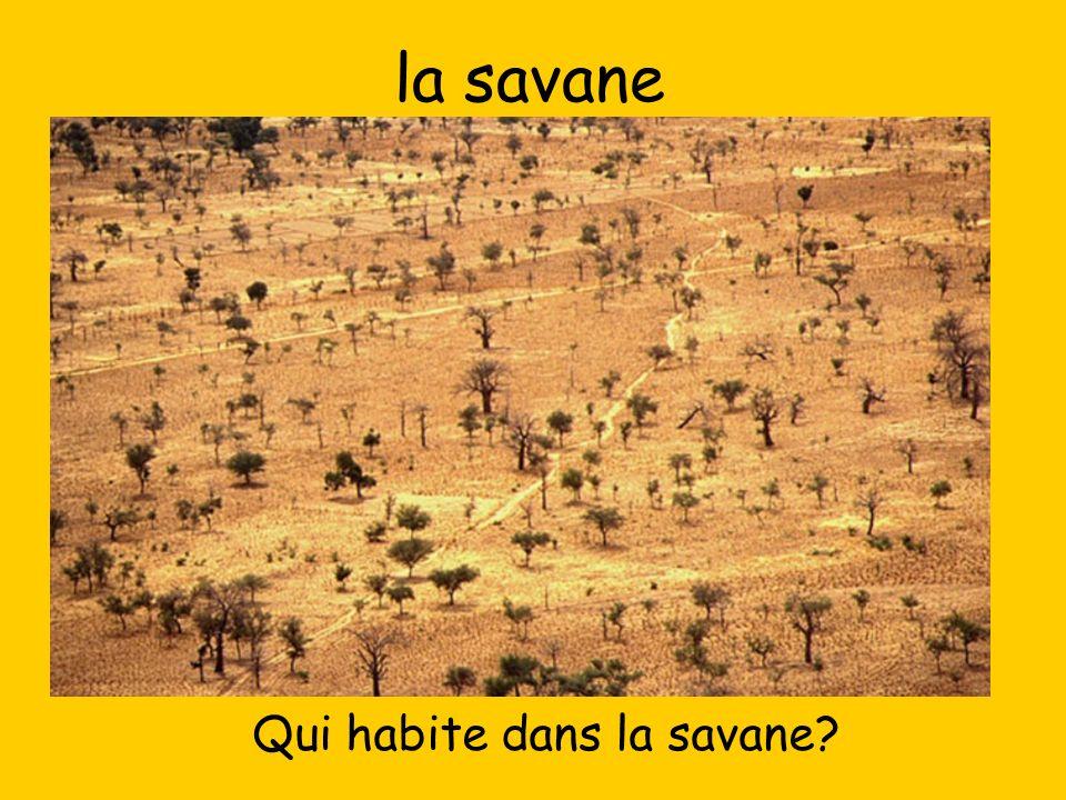 la savane Qui habite dans la savane?