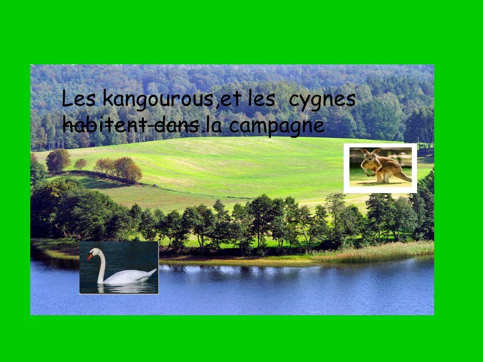 Les kangourous,et les cygnes ---- -- --------. habitent dans la campagne