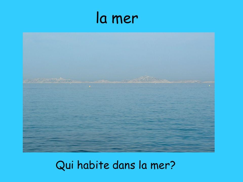 la mer Qui habite dans la mer?