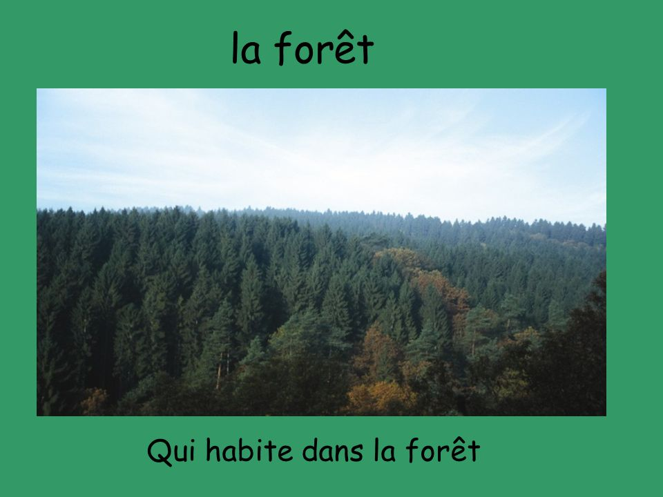 la forêt Qui habite dans la forêt
