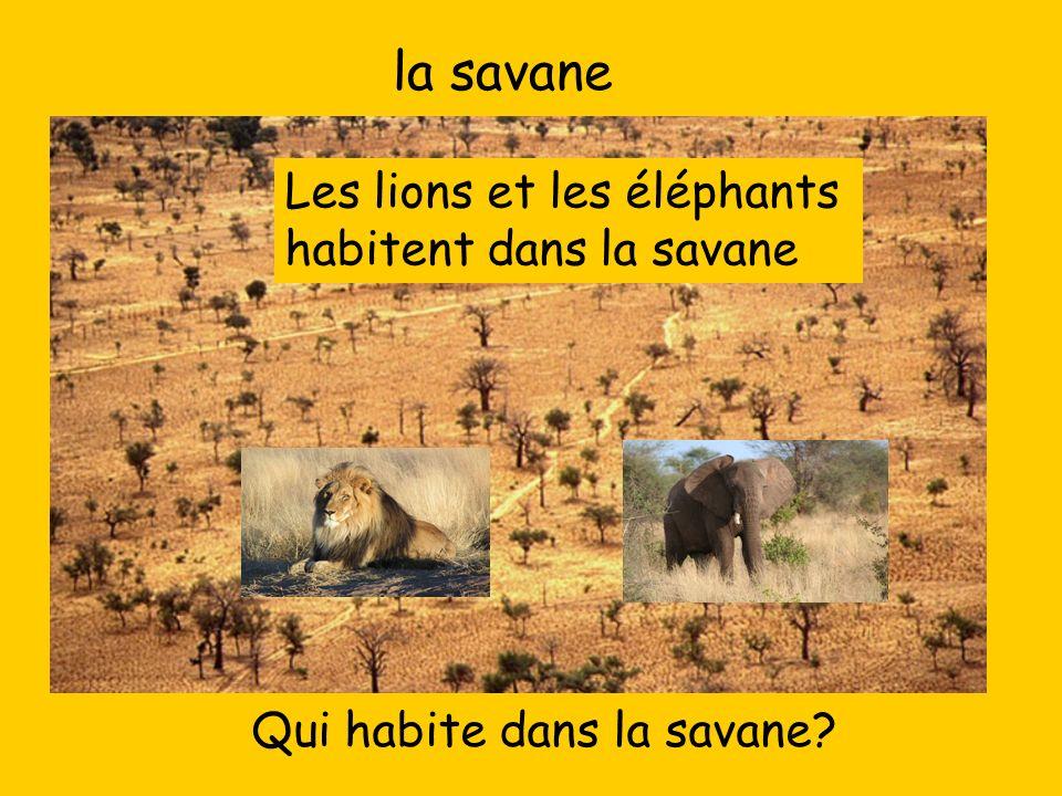 la savane Qui habite dans la savane? Les lions et les éléphants habitent dans la savane