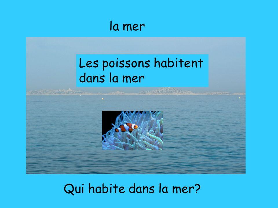 la mer Qui habite dans la mer? Les poissons habitent dans la mer