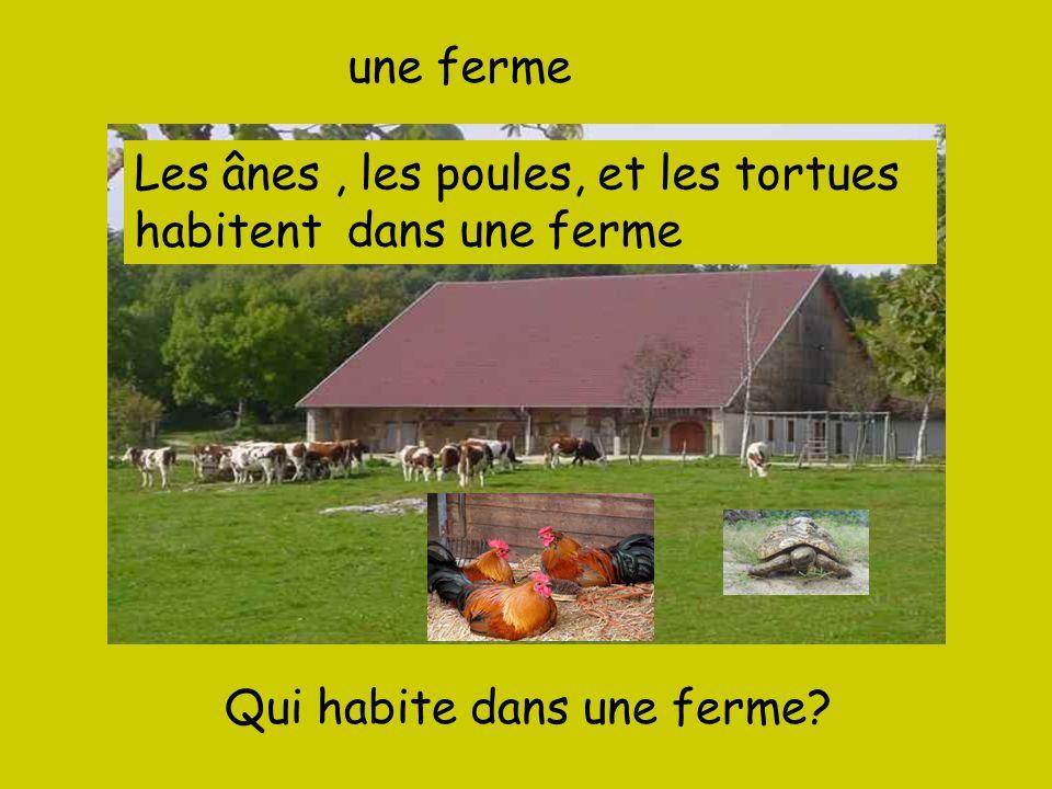 une ferme Qui habite dans une ferme? Les ânes, les poules, et les tortues -------- dans une ferme habitent