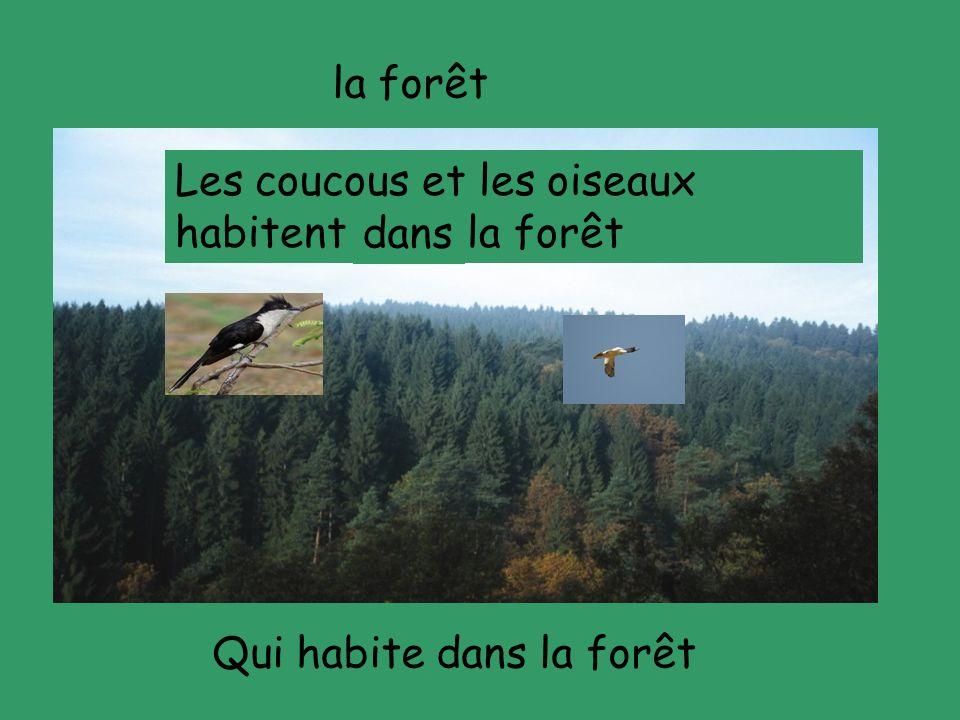 la forêt Qui habite dans la forêt Les coucous et les oiseaux habitent ---- la forêt dans