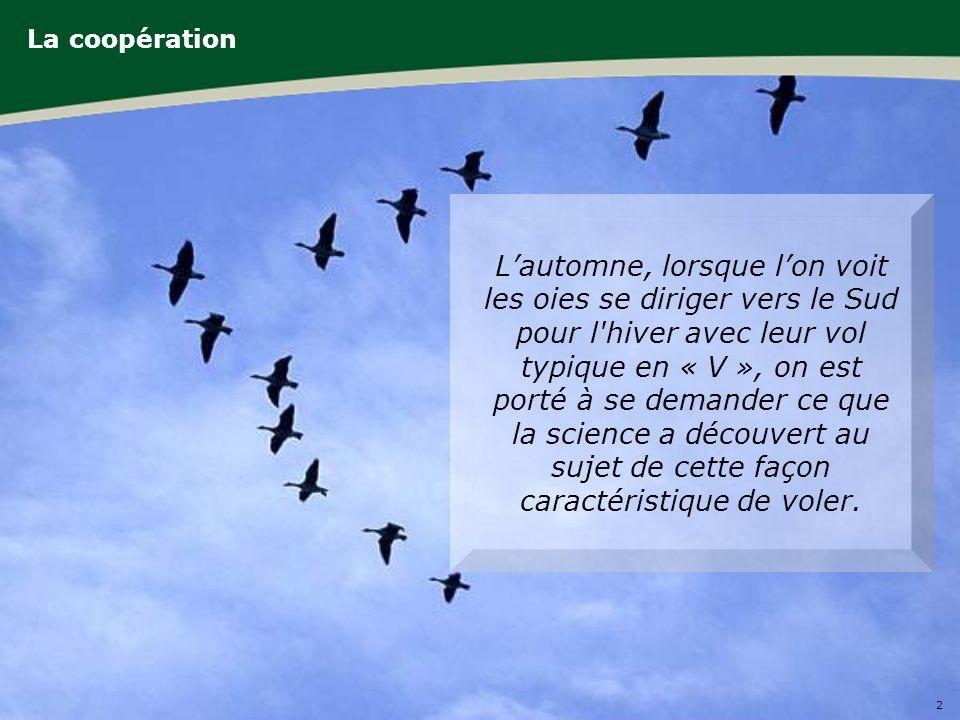 2 La coopération Lautomne, lorsque lon voit les oies se diriger vers le Sud pour l hiver avec leur vol typique en « V », on est porté à se demander ce que la science a découvert au sujet de cette façon caractéristique de voler.