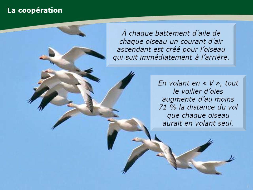 3 Forum international de léconomie sociale et solidaire 2011 La coopération À chaque battement d aile de chaque oiseau un courant dair ascendant est créé pour loiseau qui suit immédiatement à larrière.