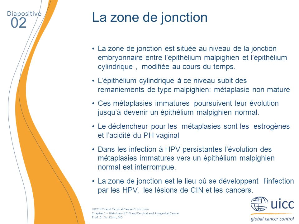 UICC HPV and Cervical Cancer Curriculum Chapter 1 – Histology of CIN and Cervical and Anogenital Cancer Prof. Dr. W. Kühn, MD La zone de jonction est