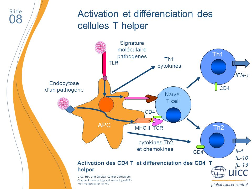 UICC HPV and Cervical Cancer Curriculum Chapter 4. Immunology and vaccinology of HPV Prof. Margaret Stanley PhD Slide 08 Activation et différenciation