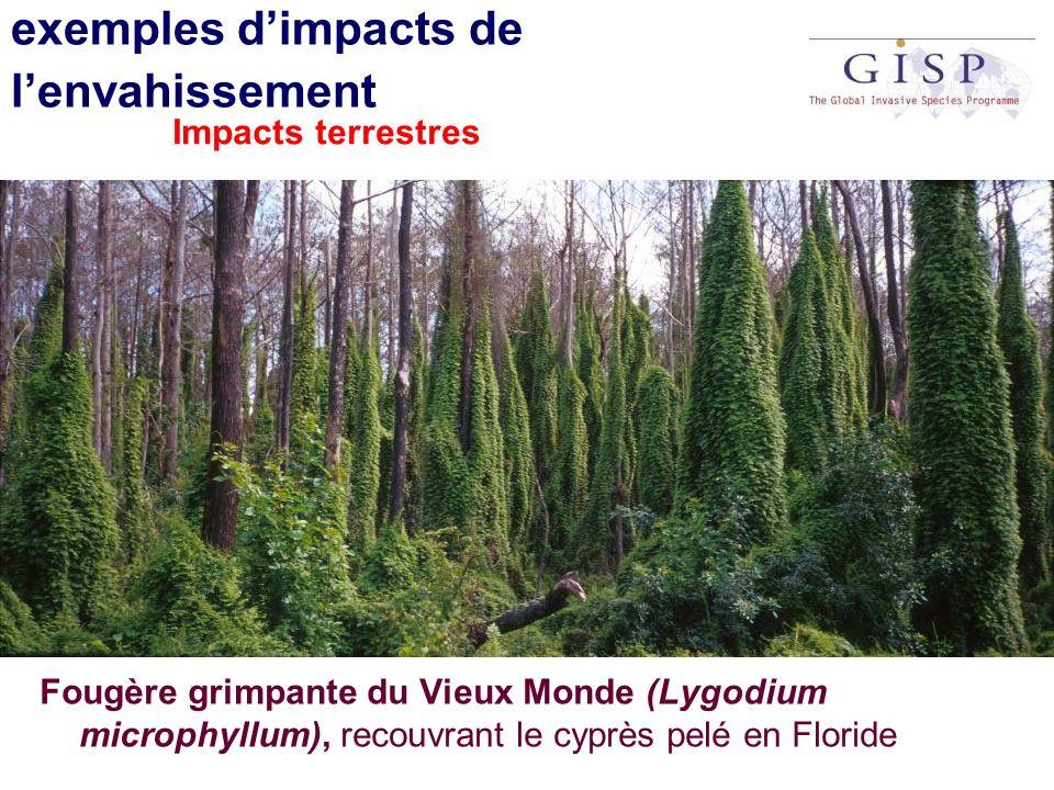 exemples dimpacts de lenvahissement Fougère grimpante du Vieux Monde (Lygodium microphyllum), recouvrant le cyprès pelé en Floride Impacts terrestres