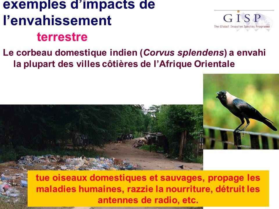 exemples dimpacts de lenvahissement Le corbeau domestique indien (Corvus splendens) a envahi la plupart des villes côtières de lAfrique Orientale tue