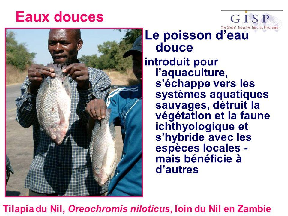 Eaux douces Le poisson deau douce introduit pour laquaculture, séchappe vers les systèmes aquatiques sauvages, détruit la végétation et la faune ichth