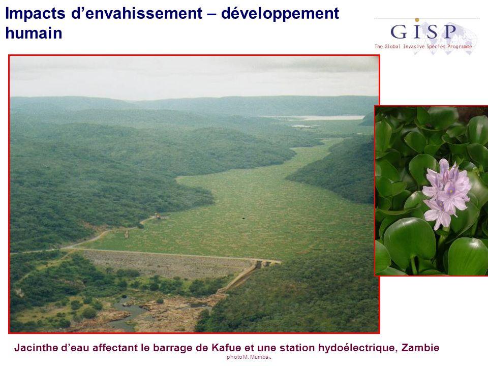 Impacts denvahissement – développement humain Jacinthe deau affectant le barrage de Kafue et une station hydoélectrique, Zambie ( photo M. Mumba )lL