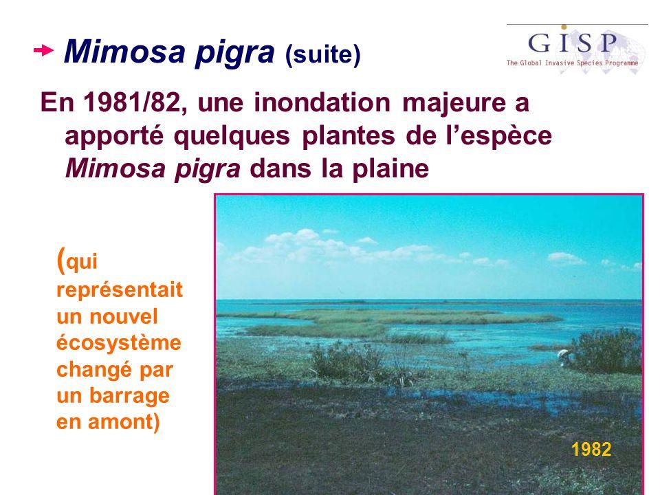 Mimosa pigra (suite) En 1981/82, une inondation majeure a apporté quelques plantes de lespèce Mimosa pigra dans la plaine ( qui représentait un nouvel