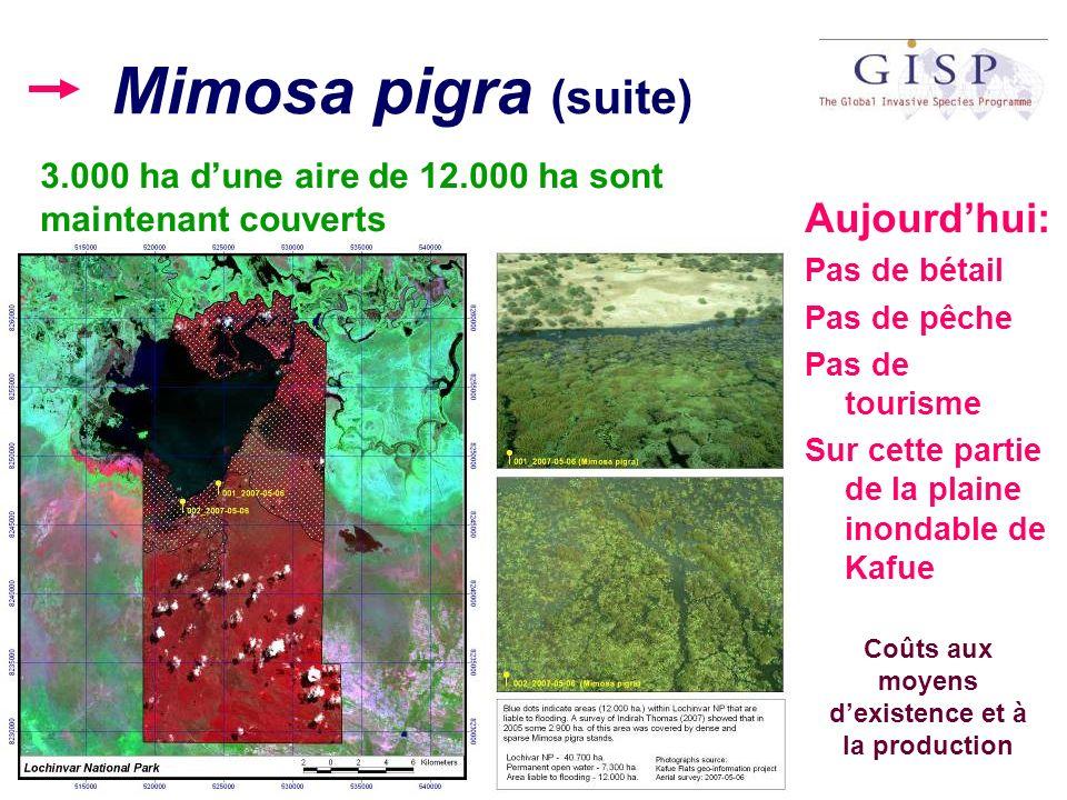 Mimosa pigra (suite) Aujourdhui: Pas de bétail Pas de pêche Pas de tourisme Sur cette partie de la plaine inondable de Kafue Coûts aux moyens dexisten