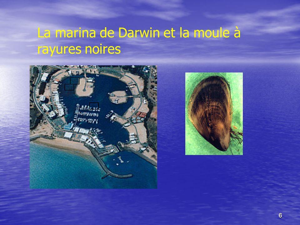 6 La marina de Darwin et la moule à rayures noires