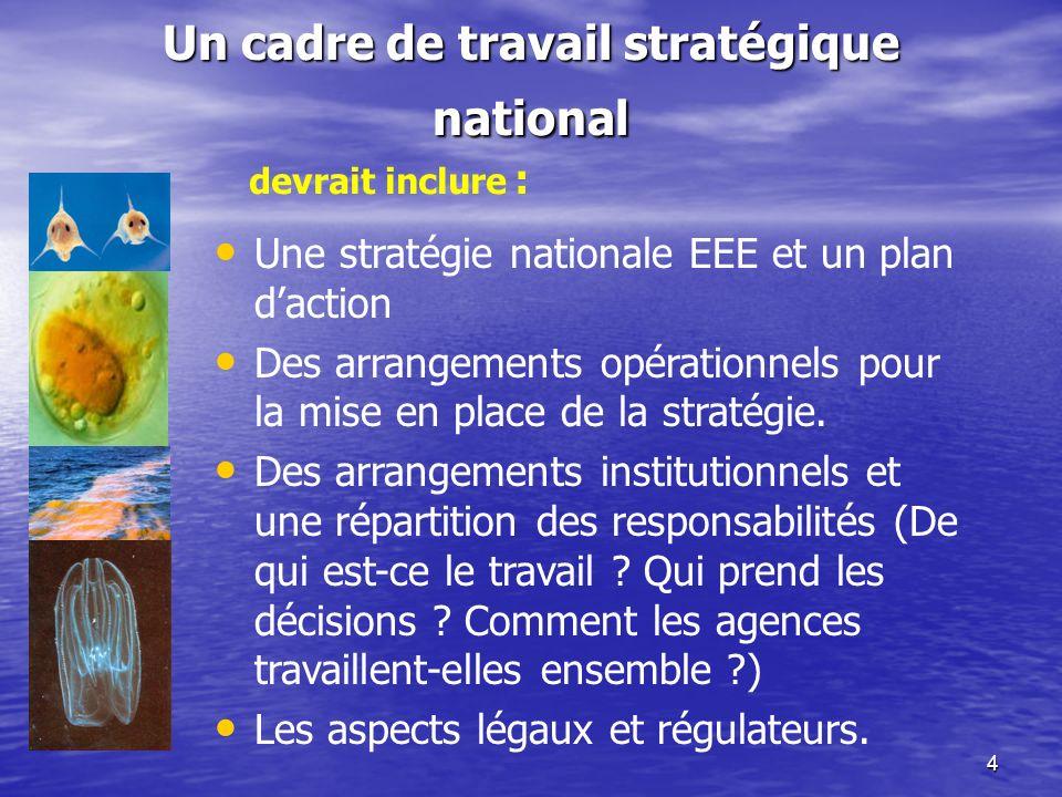 4 Un cadre de travail stratégique national Une stratégie nationale EEE et un plan daction Des arrangements opérationnels pour la mise en place de la s