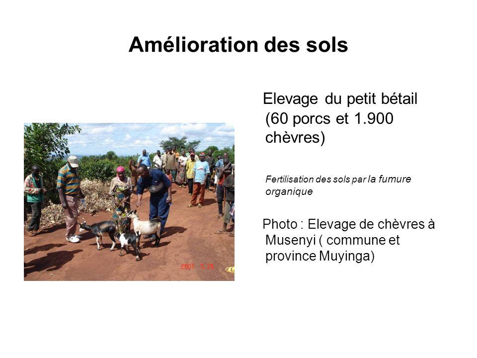 Amélioration des sols Elevage du petit bétail (60 porcs et 1.900 chèvres) Fertilisation des sols par la fumure organique Photo : Elevage de chèvres à