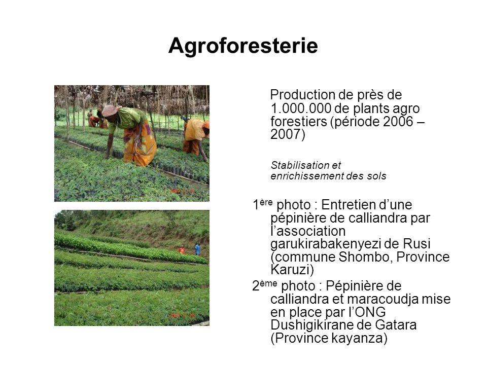 Agroforesterie Production de près de 1.000.000 de plants agro forestiers (période 2006 – 2007) Stabilisation et enrichissement des sols 1 ère photo :