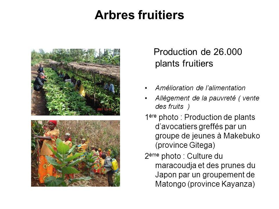 Arbres fruitiers Production de 26.000 plants fruitiers Amélioration de lalimentation Allègement de la pauvreté ( vente des fruits ) 1 ère photo : Prod