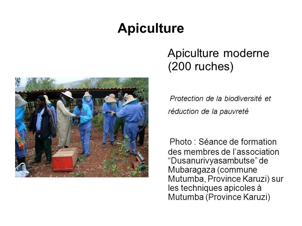 Apiculture Apiculture moderne (200 ruches) Protection de la biodiversité et réduction de la pauvreté Photo : Séance de formation des membres de lassoc