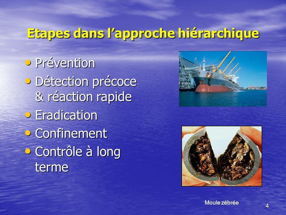 4 Etapes dans lapproche hiérarchique Moule zébrée Prévention Prévention Détection précoce & réaction rapide Détection précoce & réaction rapide Eradic