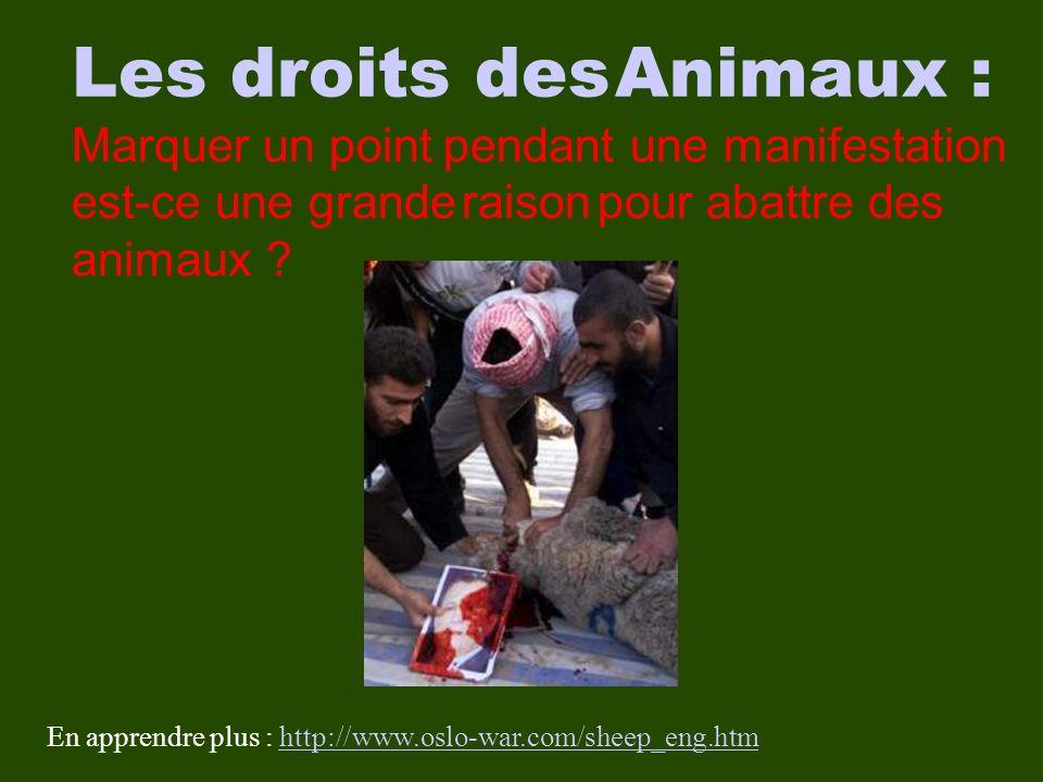 Les droits des Animaux : Marquer un point pendant une manifestation est-ce une grande raison pour abattre des animaux .