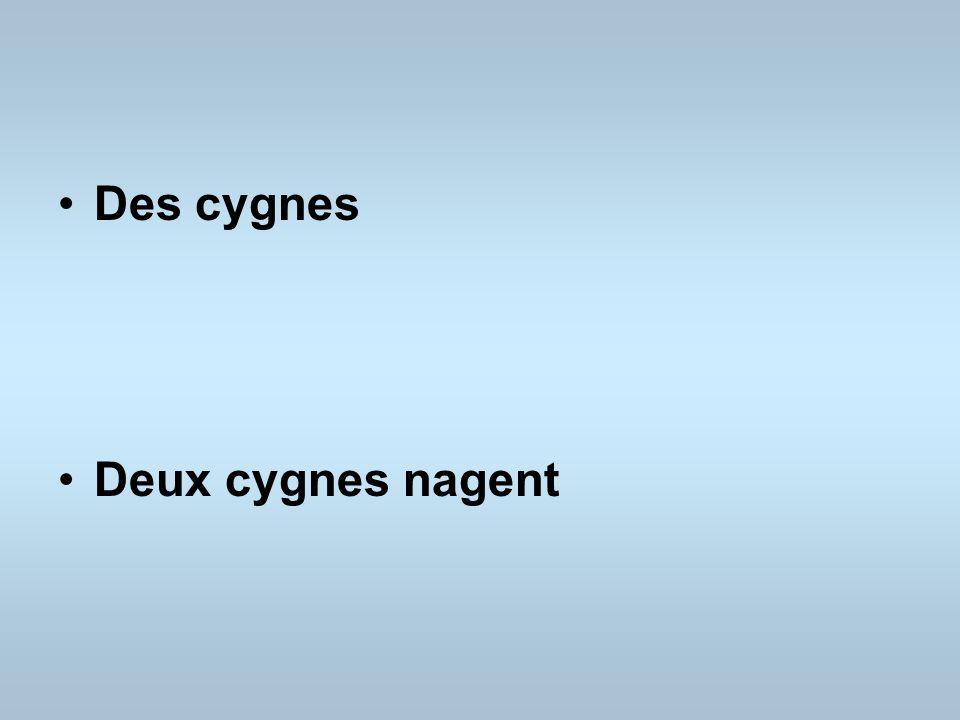 Des cygnes Deux cygnes nagent