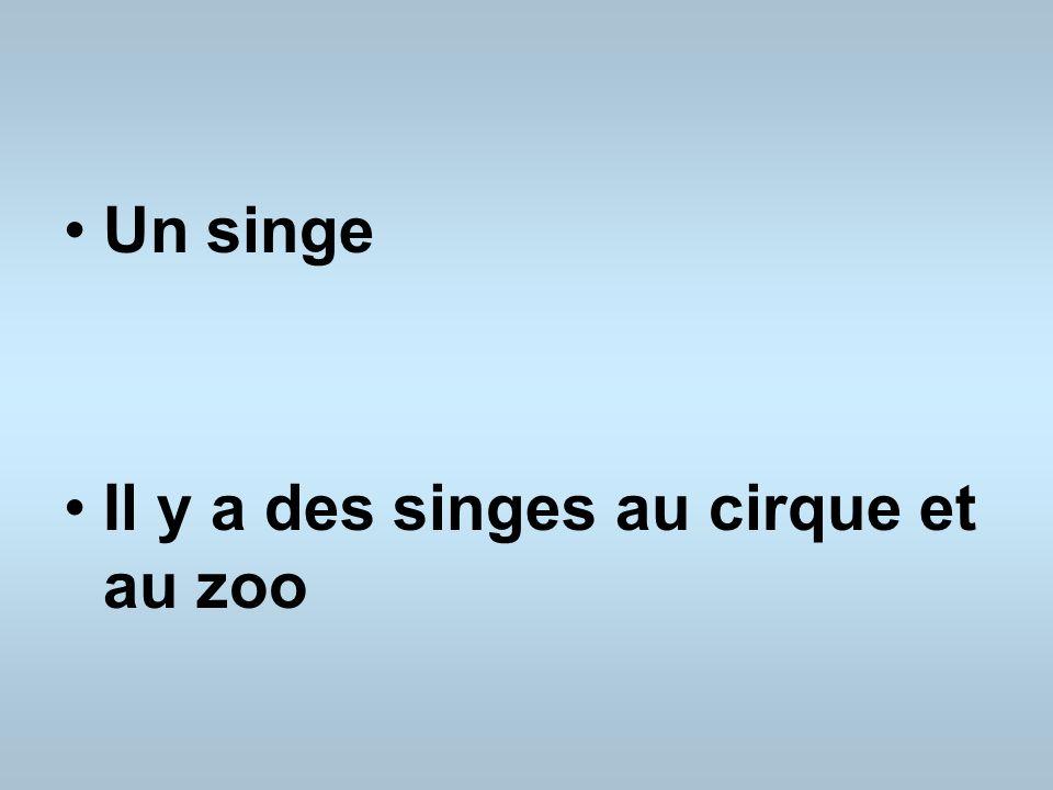 Un singe Il y a des singes au cirque et au zoo