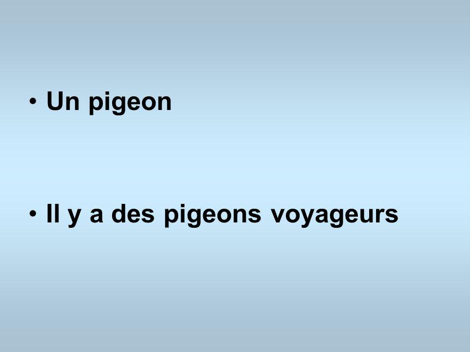 Un pigeon Il y a des pigeons voyageurs