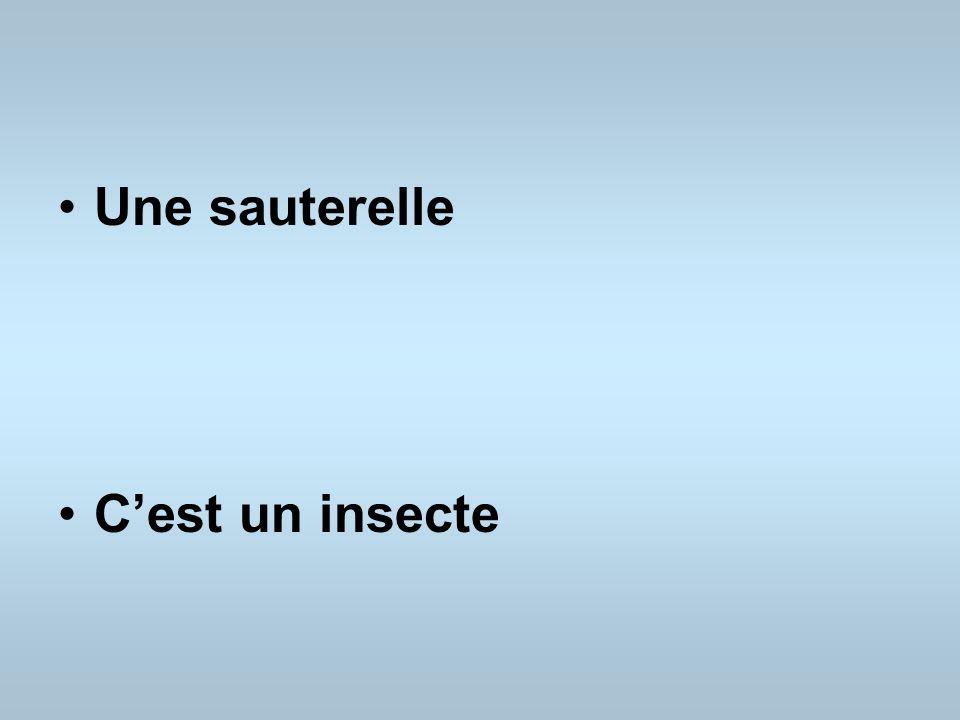 Une sauterelle Cest un insecte
