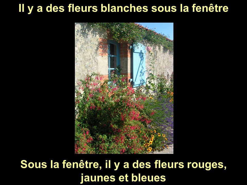Il y a des fleurs blanches sous la fenêtre Sous la fenêtre, il y a des fleurs rouges, jaunes et bleues