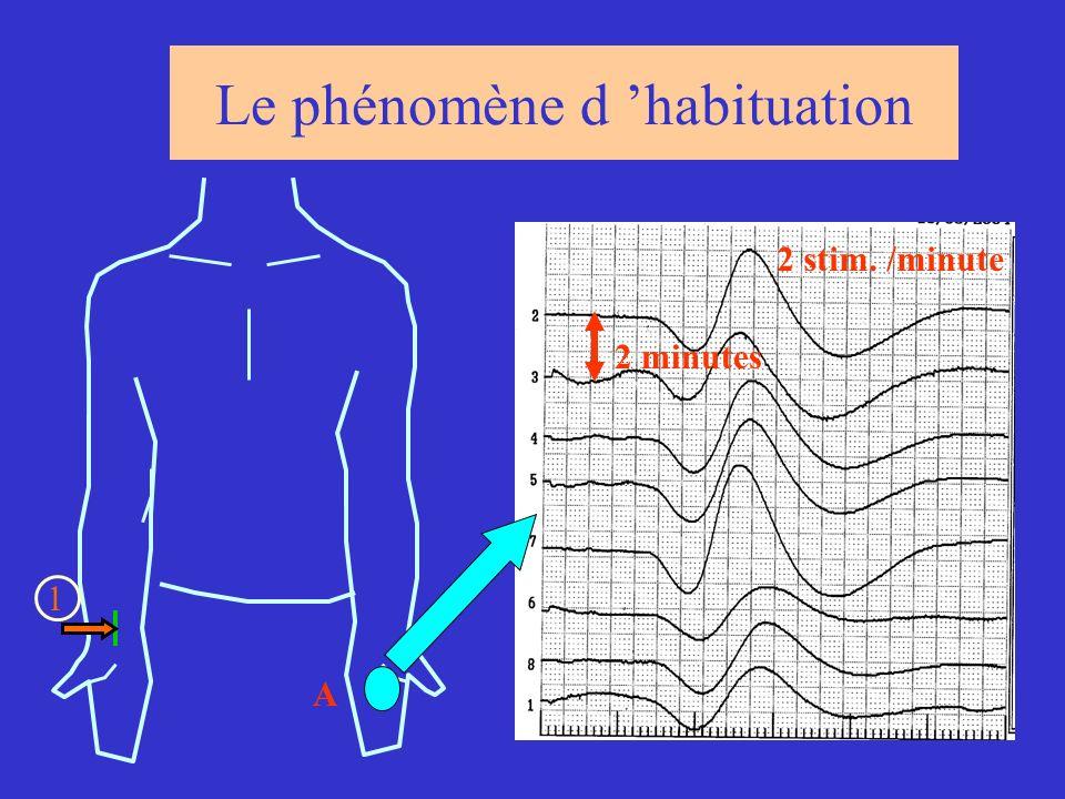 Le phénomène d habituation 1 A 2 minutes 2 stim. /minute