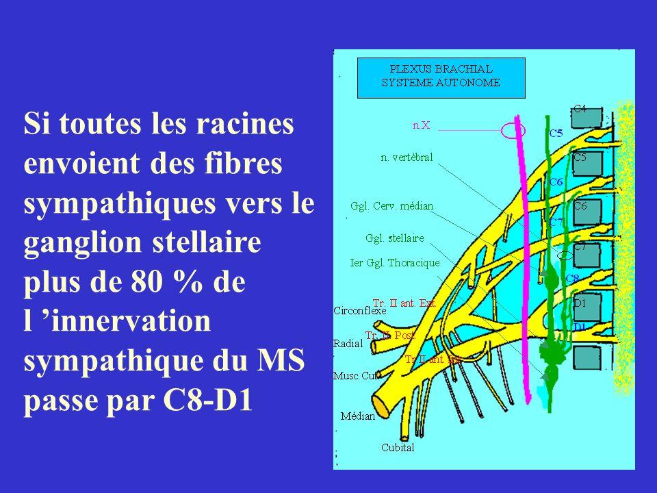 Si toutes les racines envoient des fibres sympathiques vers le ganglion stellaire plus de 80 % de l innervation sympathique du MS passe par C8-D1