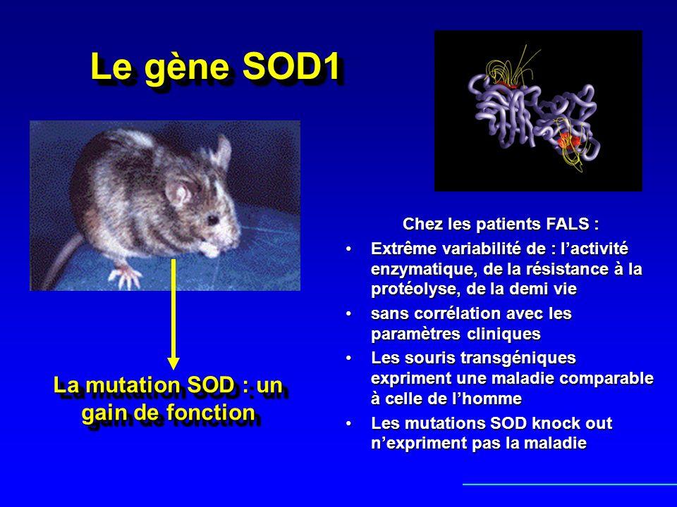 Le gène SOD1 Chez les patients FALS : Extrême variabilité de : lactivité enzymatique, de la résistance à la protéolyse, de la demi vieExtrême variabil
