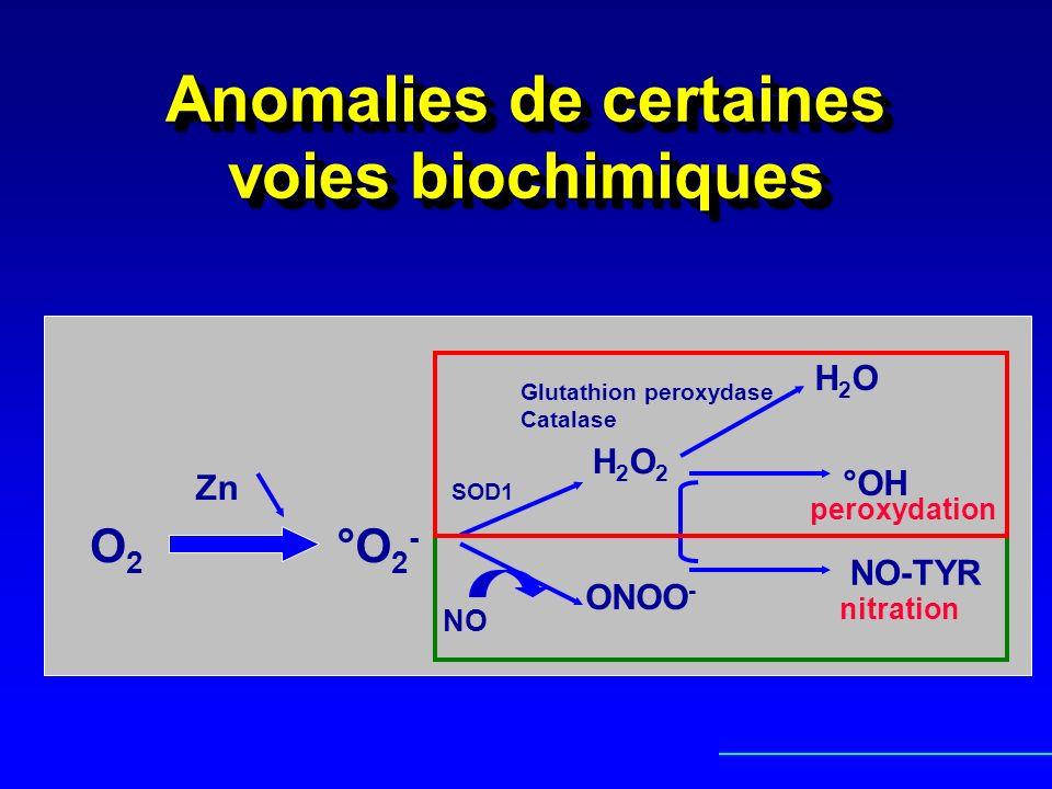 Anomalies de certaines voies biochimiques O2O2 Zn °O 2 - H2O2H2O2 H2OH2O Glutathion peroxydase Catalase SOD1 °OH NO ONOO - NO-TYR peroxydation nitrati