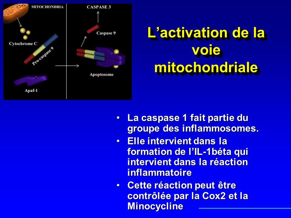 Lactivation de la voie mitochondriale La caspase 1 fait partie du groupe des inflammosomes.La caspase 1 fait partie du groupe des inflammosomes. Elle
