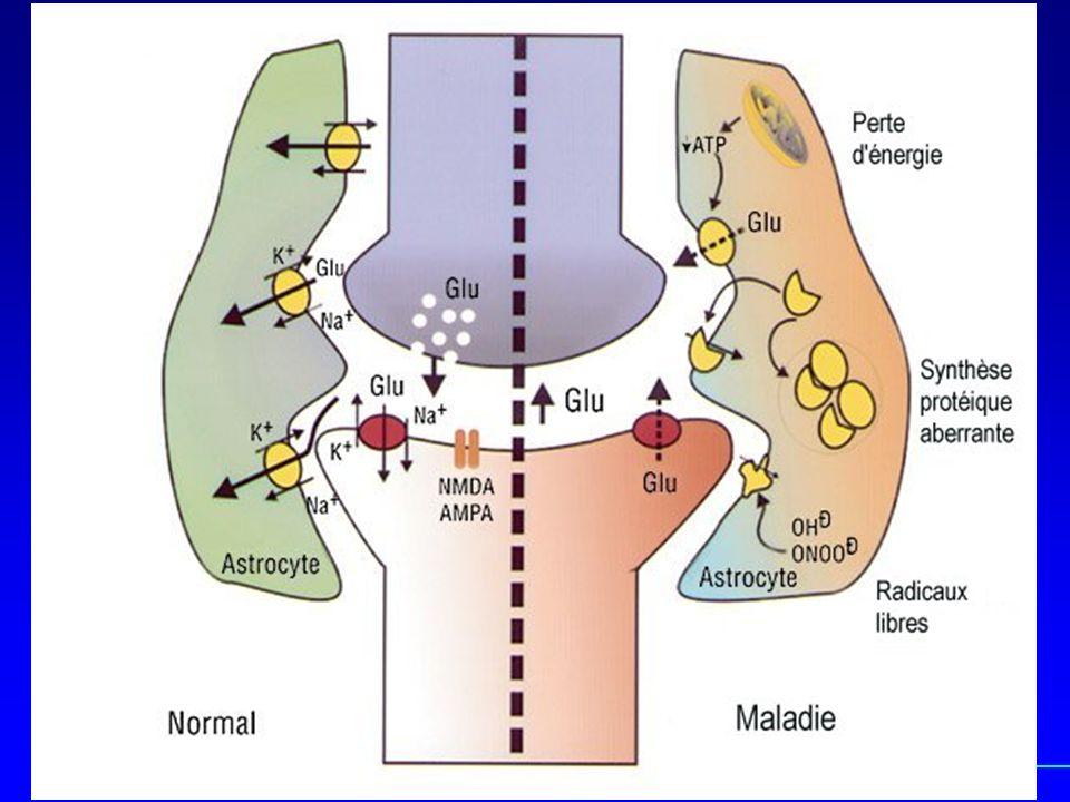 Les agrégats, une autre hypothèse La SOD mutée: une protéine instable .
