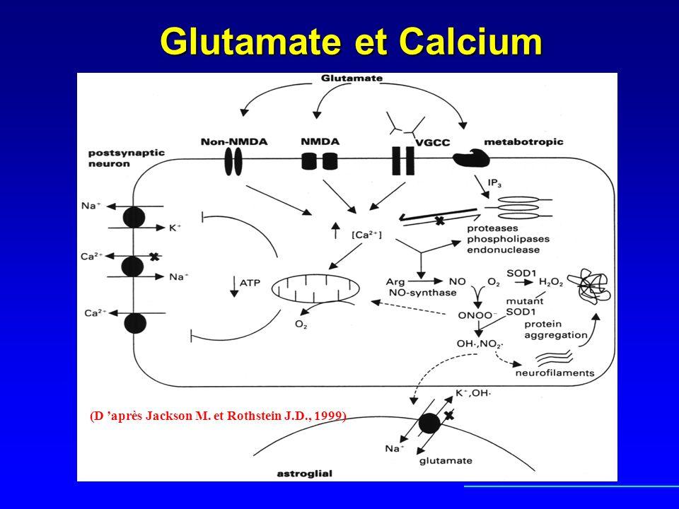 Le rôle possible des astrocytes Ils sont indispensables à la survenue de la dégénérescence motoneuronaleIls sont indispensables à la survenue de la dégénérescence motoneuronale Ils contiennent aussi des agrégats de SOD mutéeIls contiennent aussi des agrégats de SOD mutée Ils interviennent dans la recapture du glutamateIls interviennent dans la recapture du glutamate Ils sont dans la SLA particulièrement vulnérable au stress oxydant (Kim et coll., Exp.Neurol., 2003)Ils sont dans la SLA particulièrement vulnérable au stress oxydant (Kim et coll., Exp.Neurol., 2003)