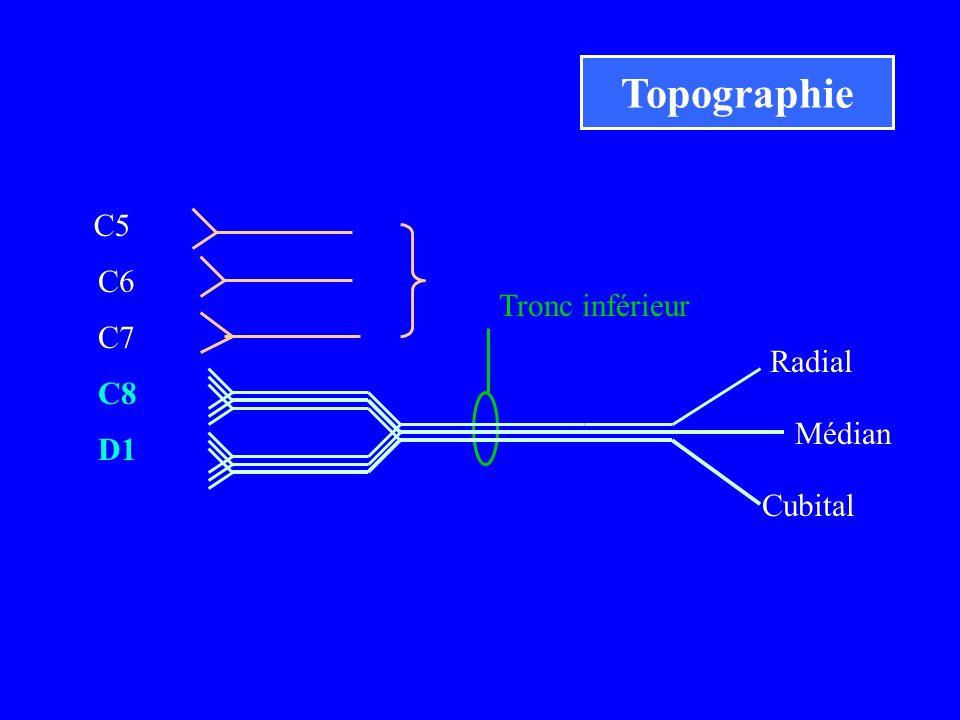 C5 C6 C7 C8 D1 Radial Médian Cubital Tronc inférieur Topographie