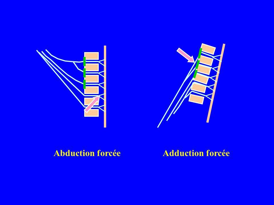 Les moyens de lexploration Cliniques *Lexamen clinique *Lexploration chirurgicale Complémentaires *Limagerie qui objective les lésions anatomiques *Lélectrophysiologie qui objective les anomalies fonctionnelles.