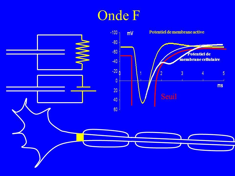 Onde F Seuil Potentiel de membrane cellulaire Potentiel de membrane active Seuil Potentiel de membrane cellulaire Potentiel de membrane active