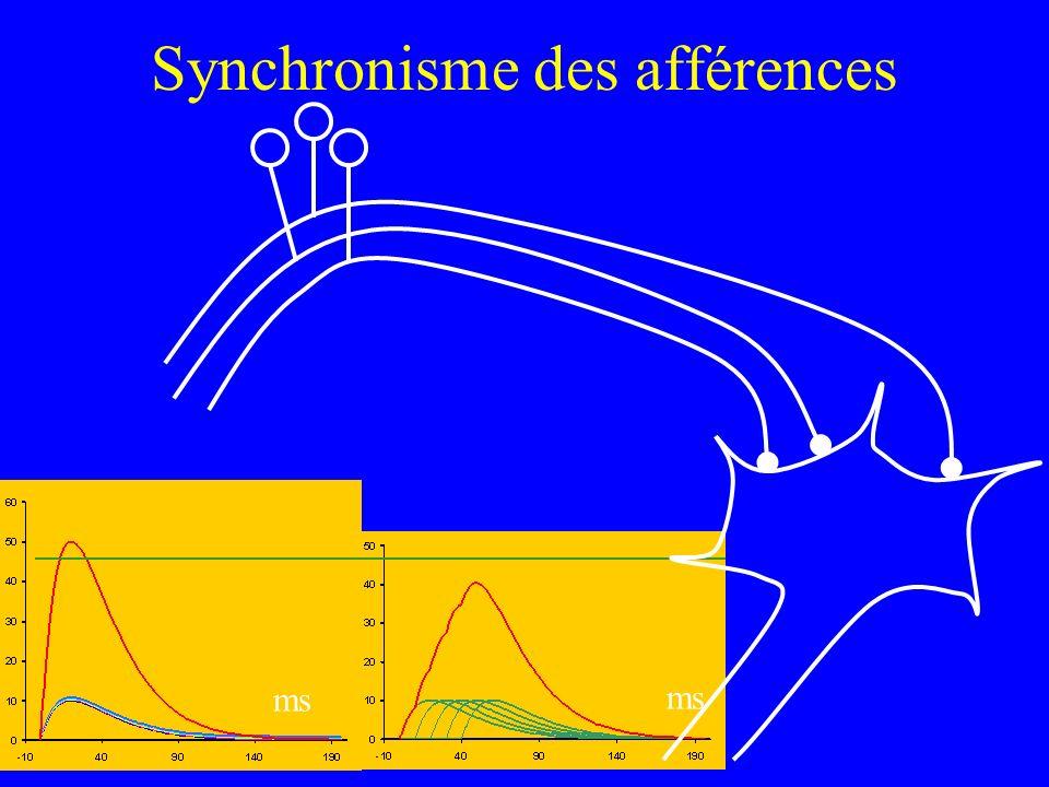 Synchronisme des afférences ms