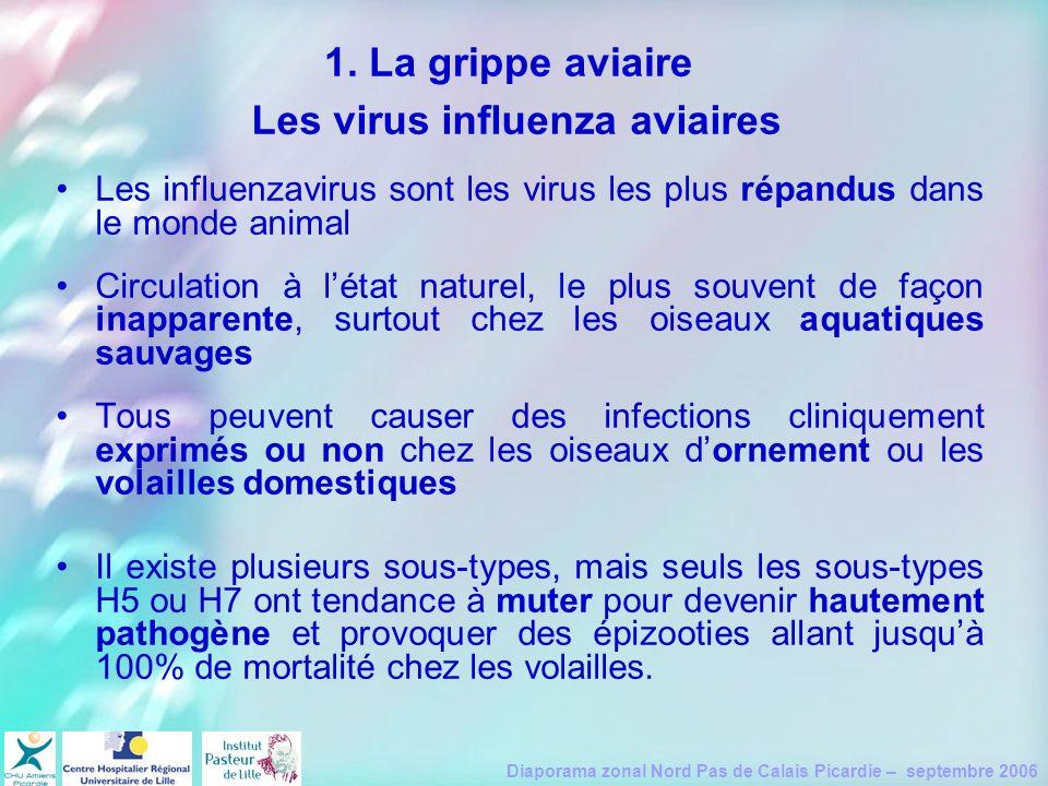 Diaporama zonal Nord Pas de Calais Picardie – septembre 2006 1. La grippe aviaire Les influenzavirus sont les virus les plus répandus dans le monde an