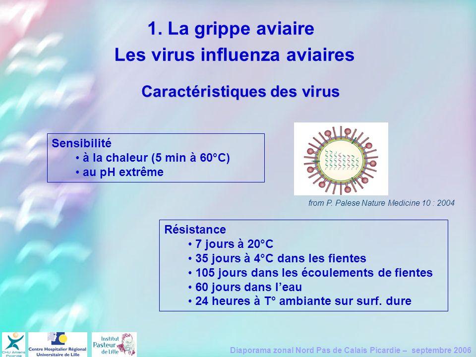 Diaporama zonal Nord Pas de Calais Picardie – septembre 2006 Caractéristiques des virus Résistance 7 jours à 20°C 35 jours à 4°C dans les fientes 105