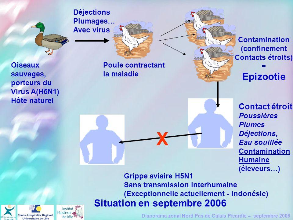 Diaporama zonal Nord Pas de Calais Picardie – septembre 2006 Oiseaux sauvages, porteurs du Virus A(H5N1) Hôte naturel Déjections Plumages… Avec virus