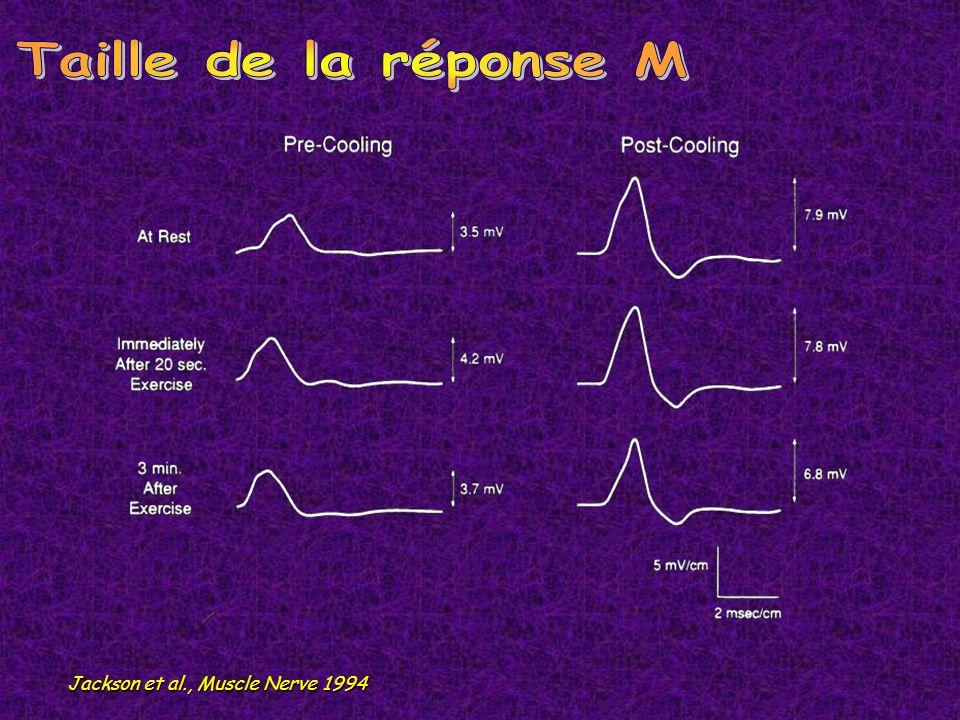 Décharge myotonique Signes myogènes EMG de surface SNR Steinert ++ PROMM ++ Thomsen + 0 Becker +++ 40 chocs à 10 Hz décrément > 25% Crise dadynamie +/ 0 + 1O à 5-10 Hz incrément > 300% Paramyotonie adynamie + froid 0 2-3 Hz décrément (et réduction de la taille de la réponse M) max.