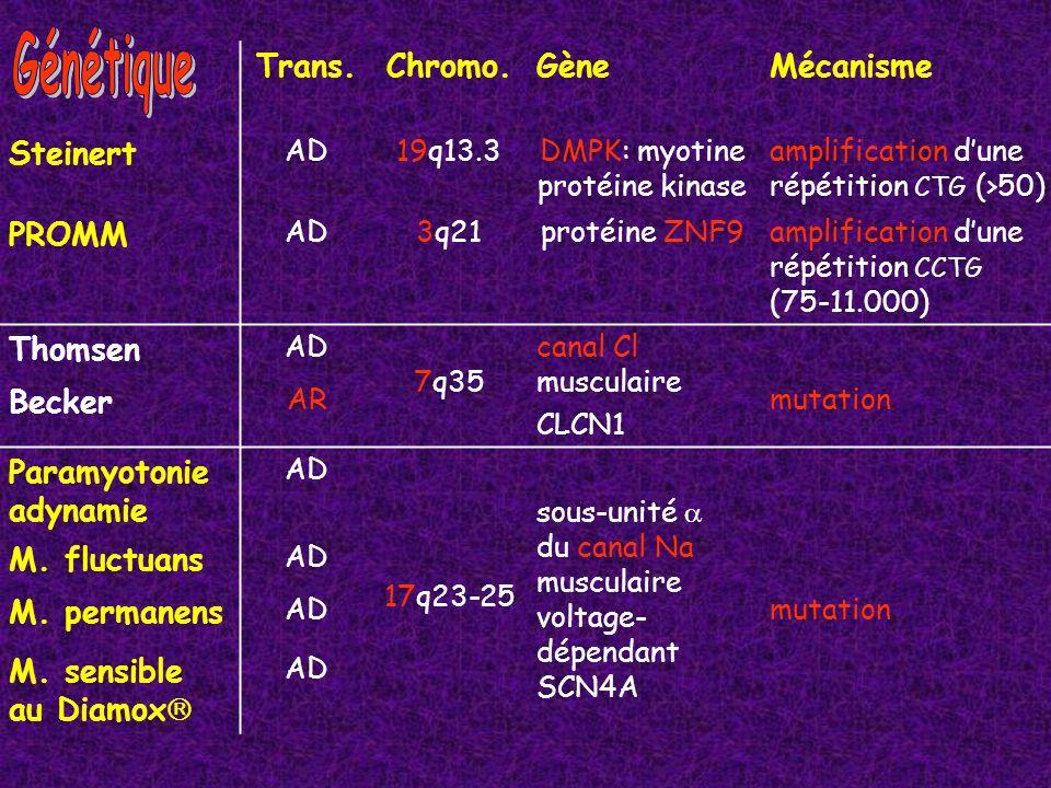 Quinine (200 to 1.200 mg/j) Phénytoïne (300-400 mg/j) Méxilétine (150 to 1.000 mg/j : Mexitil (antiarythmique de classe I, stabilisateur de membrane) Tocaïnide (toxicité hématologique) Dilantine (300 to 400 mg/j, niveau thérapeutique : 10 - 20 µl/ml) Diurétiques thiazidiques (diminution du K + extracellulaire) Procaïnamide (125 to 1.000 mg/d) (risque de LE disséminé) Carbamazépine : Tegretol (inhibiteur du canal Na) Acétazolamide (125 to 750 mg/j) : Diamox (inhibiteur de lanhydrase carbonique) diminution de la kaliémie par acidose métabolique) sans effet dans la paramyotonie