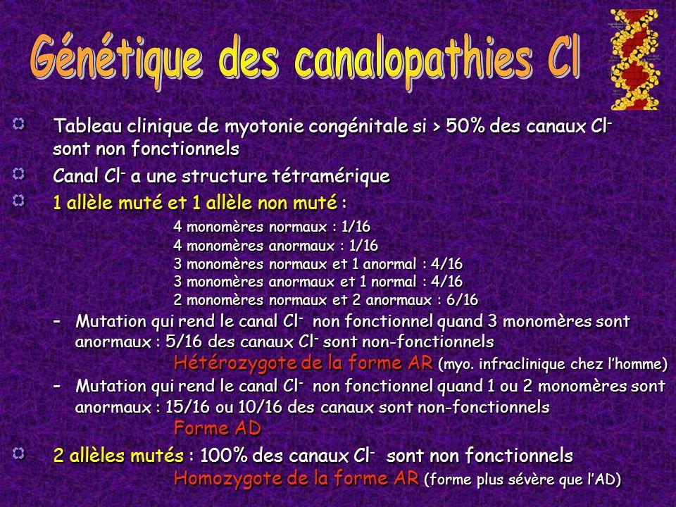 Tableau clinique de myotonie congénitale si > 50% des canaux Cl - sont non fonctionnels Canal Cl - a une structure tétramérique 1 allèle muté et 1 all