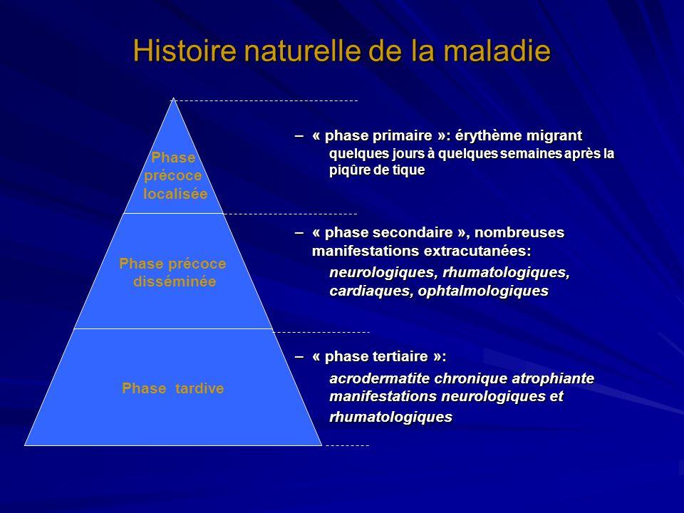 Histoire naturelle de la maladie Phase précoce localisée Phase précoce disséminée Phase tardive –« phase primaire »: érythème migrant quelques jours à
